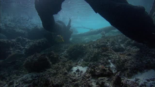 fallen mangrove trees, snappers, aldabra, indian ocean  - mangrove tree stock videos & royalty-free footage