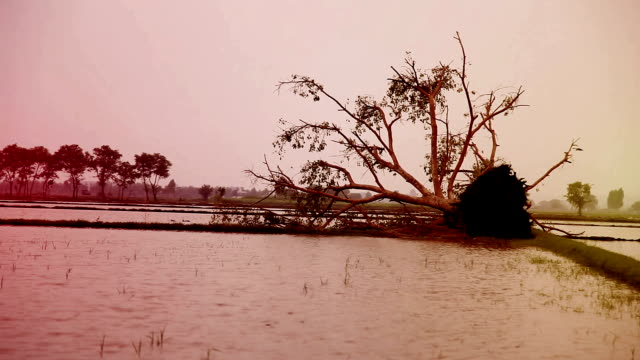 a fallen tree after hurricane - vortex stock videos & royalty-free footage