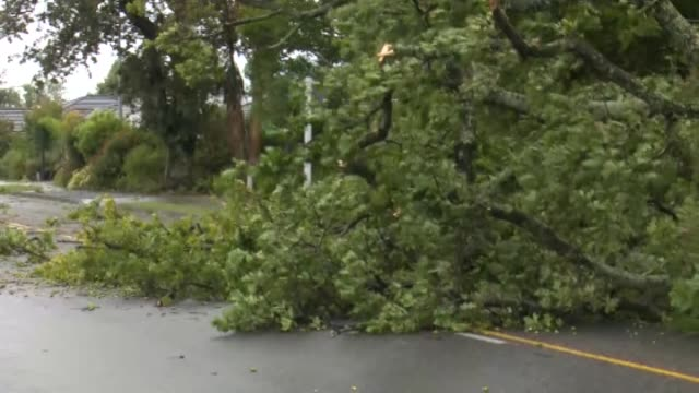fallen tree blocking road in richmond, nelson, during strong winds from cyclone gita. - vortex stock videos & royalty-free footage