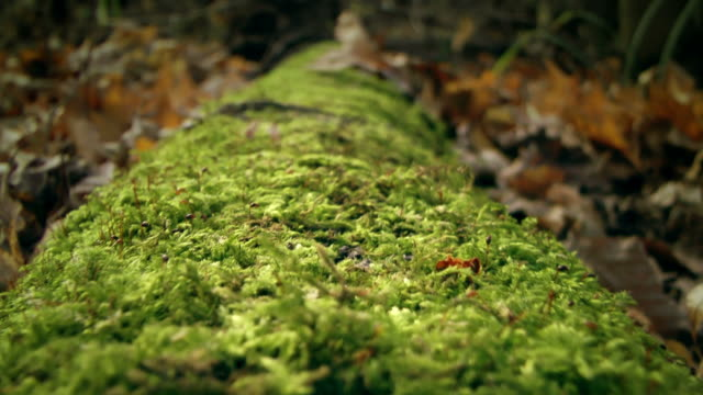 Fallen tree covered with moss
