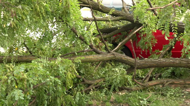 fallen tree crushed a car underneath - fallen tree stock videos and b-roll footage