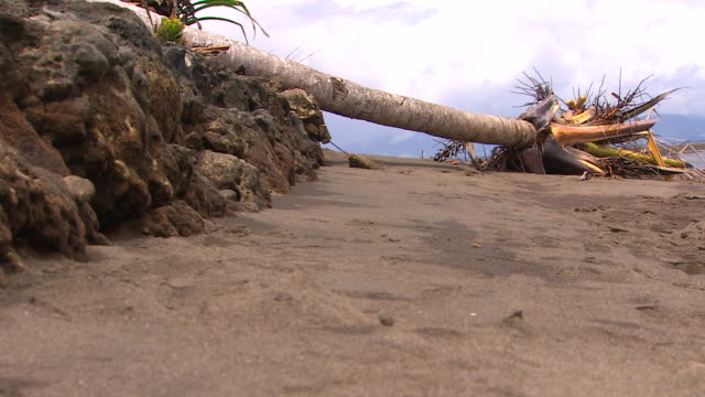 vídeos de stock, filmes e b-roll de fallen tree due to erosion in coastal area of vunidogoloa, fiji, where waters are encroaching due to climate change. - oceano pacífico do sul