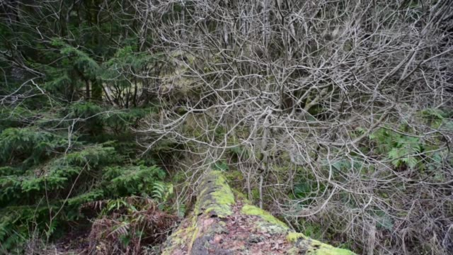 fallen tree in the galloway forest - david johnson stock videos & royalty-free footage