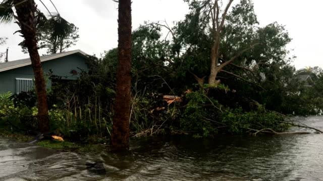 fallen tree lies in flood water in aftermath of hurricane irma in naples florida - tropical storm stock videos & royalty-free footage