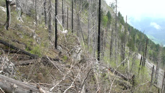 fallen tree skeletons, parts of forests burnt down in prokletije mountains (albanian alps; accursed mountains) in kosovo - off the beaten path stock videos & royalty-free footage
