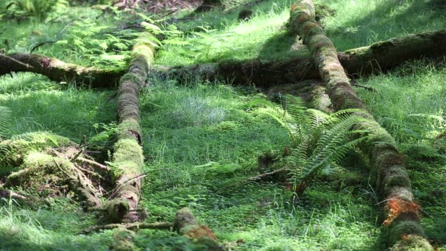 fallen tree trunks on a forest floor on black fell, lake district, uk. - moss stock videos & royalty-free footage