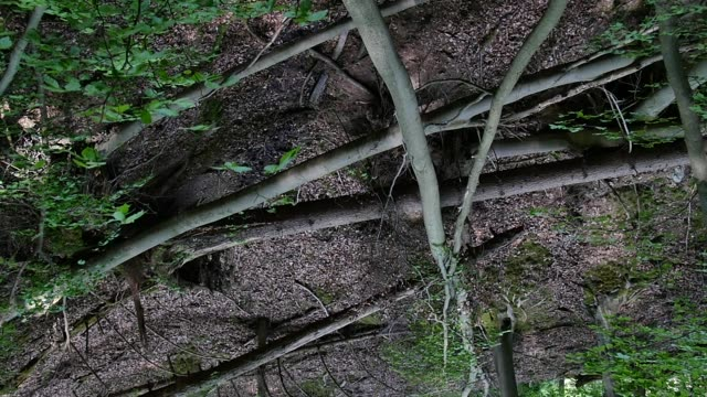 fallen trees in deciduous forest - deciduous stock videos & royalty-free footage