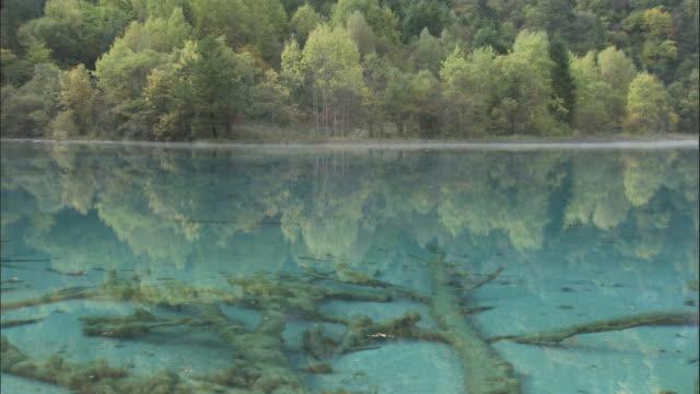 Fallen trees lie at bottom of Five Flower Lake, Jiuzhaigou, China