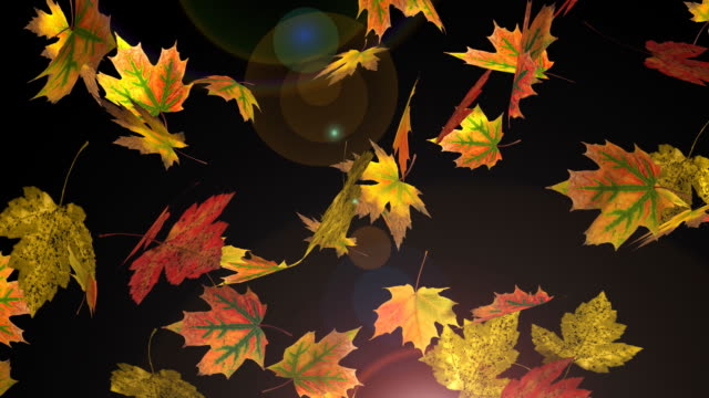 falling autumn leafs - loop - maple leaf stock videos and b-roll footage