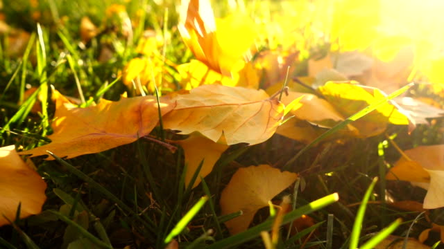 falling autumn leaves - november stock videos & royalty-free footage