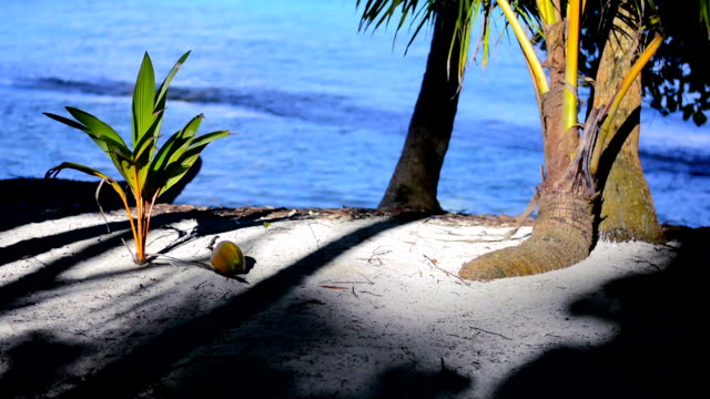falling coconut - freshness stock videos & royalty-free footage