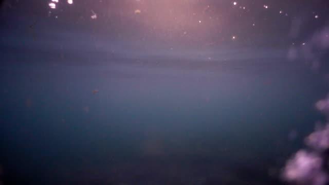 水に落ちると沈みます。スローモーション。バラ午後遅く。仄暗い水の底。バージョン 2 - 沈没する点の映像素材/bロール