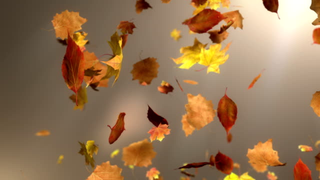 stockvideo's en b-roll-footage met hd: falling leaf loopable background - herfst