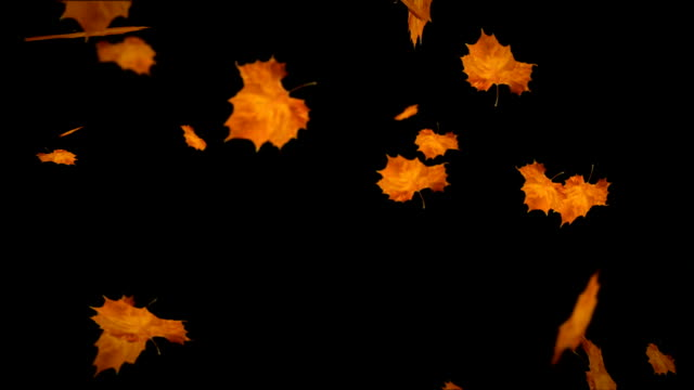 falling leaves autumn loopable - leaf stock videos & royalty-free footage
