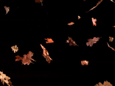 vídeos de stock, filmes e b-roll de falling leaves closeup - sparklondon