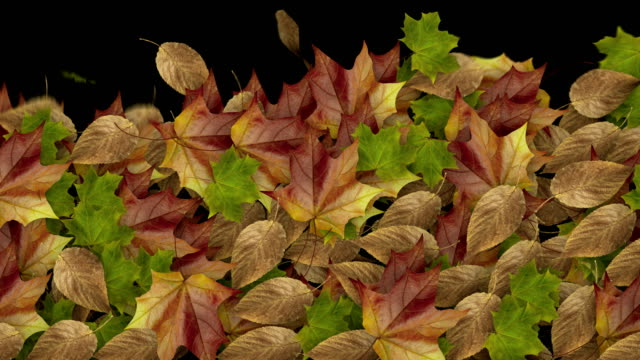 falling leaves filling screen with luma matte - matte stock videos & royalty-free footage