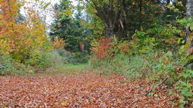 4K UHD Falling Leaves in Autumn