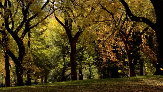 vidéos et rushes de feuilles tombantes dans le parc central - central park manhattan
