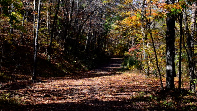 falling leaves in woods - national forest stock videos and b-roll footage