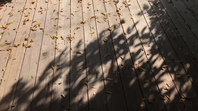 falling leaves shades moving on wooden floor - shade stock videos & royalty-free footage