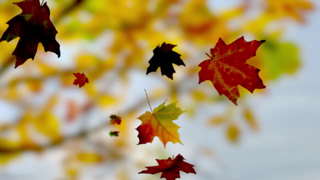 stockvideo's en b-roll-footage met falling leaves - herfst