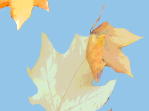 falling leaves - four objects stock videos & royalty-free footage