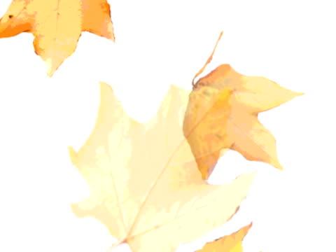 falling リーブズ(pal - 四つ点の映像素材/bロール