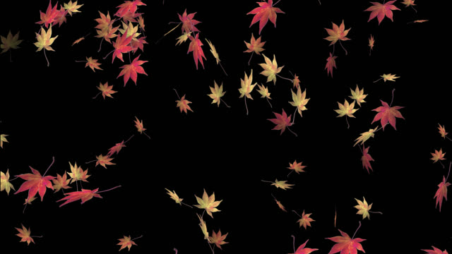 falling maple leaves with alpha channel -seamless video - 循環する動き stock videos & royalty-free footage