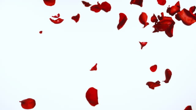 slo mo falling rose petals - falling stock videos & royalty-free footage