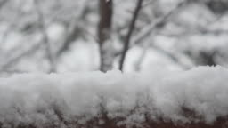 Falling snow on a fence