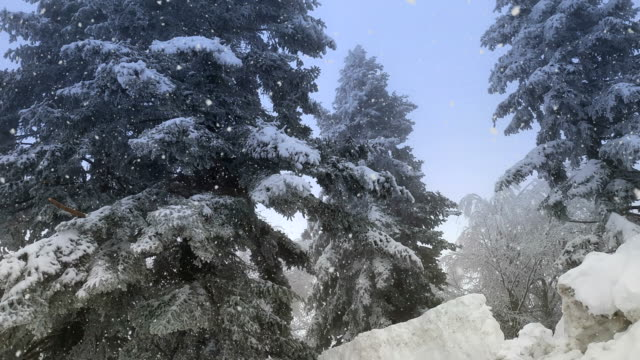 falling snow on snowy spruce trees at winter in blizzard stock video - vermont stock videos & royalty-free footage