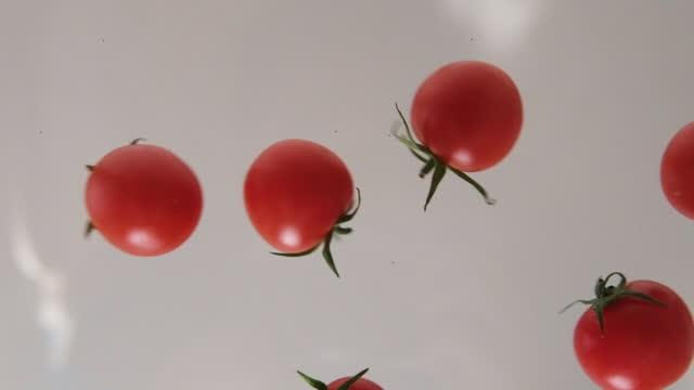 vidéos et rushes de tomates tombantes sur le ralenti blanc de fond - tomato
