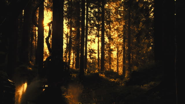 hd slow-motion: falling tree - fallen tree stock videos and b-roll footage