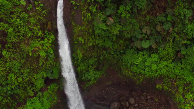 falls in la paz waterfall gardens nature park / san jose, costa rica - 熱帯の低木点の映像素材/bロール