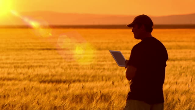 Famer uses a tablet while standing in his crops