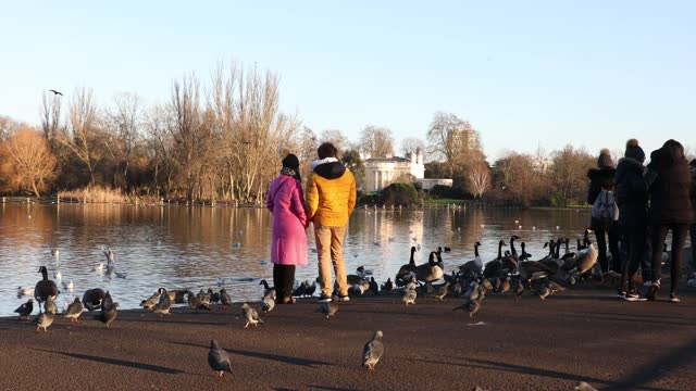 families feed the birds by the lake in regents park during the third national lockdown, of the covid-19 pandemic on january 09, 2021 in london,... - feeding stock videos & royalty-free footage