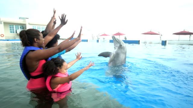 familie und delphin winken einander - 14 15 years stock-videos und b-roll-filmmaterial