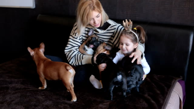 family and their pets - french bulldog stock videos and b-roll footage