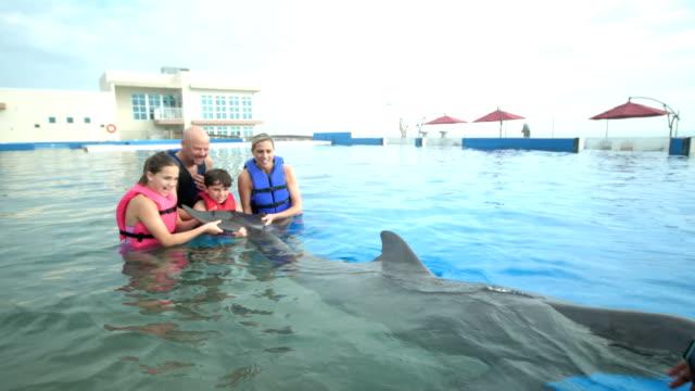 stockvideo's en b-roll-footage met familie en trainer in water met dolfijnen, houden de staart - 35 39 years