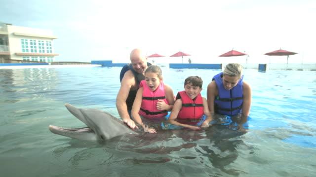 familie und trainer im wasser mit delphin - 12 13 years stock-videos und b-roll-filmmaterial