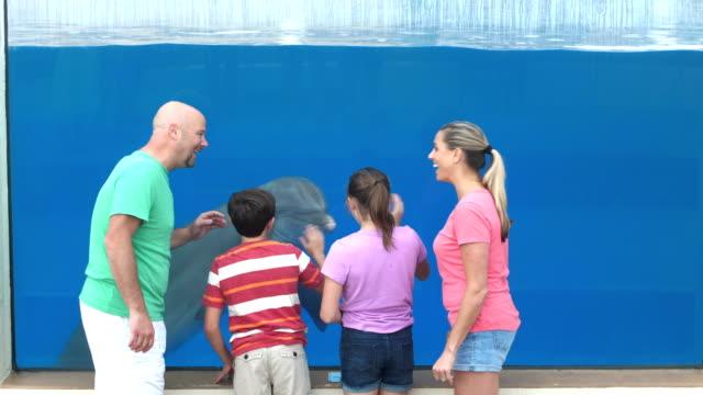 stockvideo's en b-roll-footage met familie in het aquarium kijken naar dolfijnen onder water - 12 13 jaar