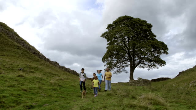 family at sycamore gap - north east england stock videos & royalty-free footage