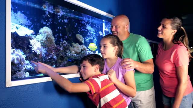 stockvideo's en b-roll-footage met familie op het observeren van een zoutwater fish tank aquarium - 12 13 jaar