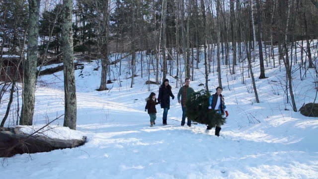 Family carrying christmas tree through forest