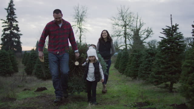 family carrying their tree home - christmas tree stock videos & royalty-free footage