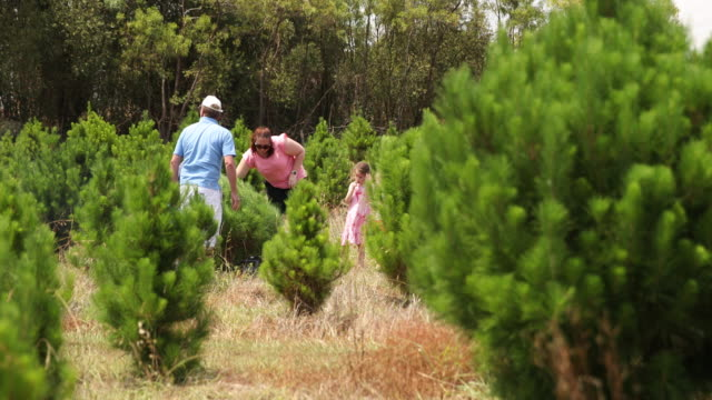 80 Top Christmas Tree Farm Video Clips Footage Getty Images