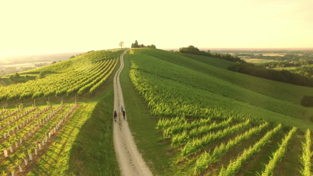 aerial family cycling in countryside - vineyard stock videos & royalty-free footage
