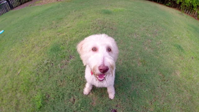 Family dog jumps and licks the camera