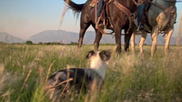 family enjoying the day horseback riding in the fields with their dog - ranch stock videos & royalty-free footage