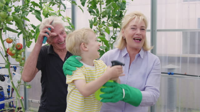 family enjoying while gardening in greenhouse - greenhouse stock videos & royalty-free footage
